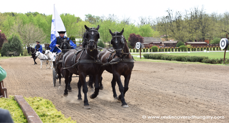 Hungary Horse show, meal and carriage ride (near Budapest)